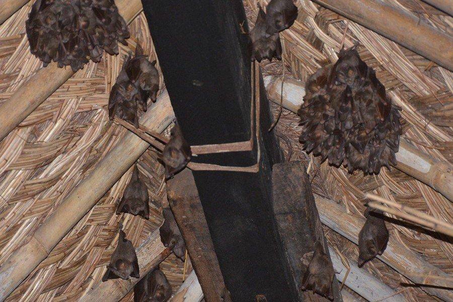 Отпугиватель летучих мышей отпугиватель кротов sm-153 на солнечной батарее