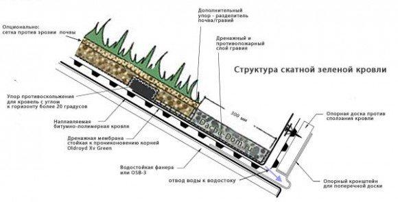 Правила озеленения крыши