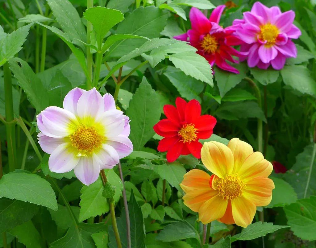 классические цветы веселые ребята фото на клумбе никогда говорила детям